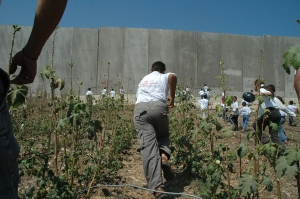 Apartheid wall in Palestine